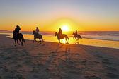 Horse riding  on  beach — Stock Photo