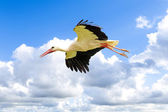 White stork in blue sky — Stock Photo