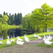 Many wild geese at a lake — Stock Photo #47740035