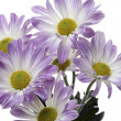 Foto Stock: Close up shot of purple flowers