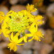 Stock Photo: Intricate yellow flower