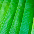 Stock Photo: Lined up bananleaves