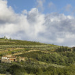 Far view of a vineyard in tuscany — Lizenzfreies Foto