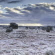 Rare snowfall in arizondesert — Stock Photo #13328178