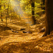 Foto Stock: Sunbeam in forest