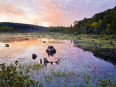 Colorful swamp — Stock Photo