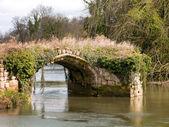 Bridge on the water — Stock Photo