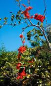 Contrasting orange flowers — Stock Photo