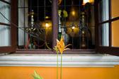 Çiçek ve pencere — Stok fotoğraf