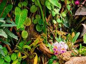 Folhas de enforcamento — Foto Stock