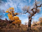 树叶变黄 — 图库照片