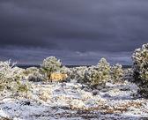 Koně s temnou oblohu a sníh v arizoně — Stock fotografie