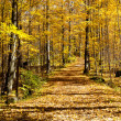 Stock Photo: Yellow walking trail