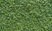 Plant walls — Stock Photo