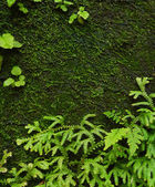 Background moss — Stock Photo