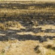 Straw was burned. Rice straw left over from the harvest was burned — Stock Photo