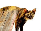 Stray cats — Stock Photo
