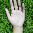 Hand on green lush grass — Stock Photo