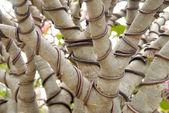 Bonsai tree Wrapped wire — Stock Photo