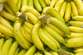 Rows of ripe yellow bananas — Stock Photo