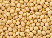Soy bean pattern as background — Stock Photo