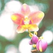 Flower in garden with retro filter effect — Photo