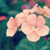 Flower in garden with retro filter effect — Stock Photo