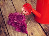 Flowers and watering can old retro vintage style — Foto Stock