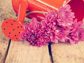 Flowers and watering can old retro vintage style — Stock Photo