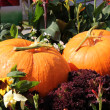 Two pumpkins — Stockfoto #33068239