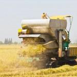 Rice combine harvester — Stock Photo