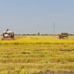 Rice combine harvesters — Stock Photo