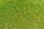 Natural outdoor green grass — Stock Photo