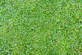 Natural outdoor green grass (in the shade) — Stock Photo