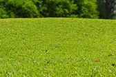 Травой холмик рядом с гольф зеленый — Стоковое фото