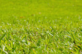 Natural outdoor green grass, shallow dof — Stock Photo