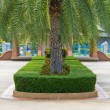 Stock Photo: Topiary in park