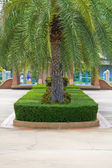 Topiary in the park — Stock Photo