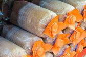 Mushroom bag culture — Stock Photo