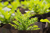 New young flower plant — Stock Photo