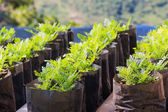 Flower plant propagation — Stock Photo