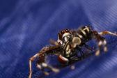 пауки-скакуны — Стоковое фото