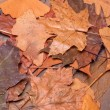 Stock Photo: Leaves on a stone wall