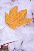 Höstlöv på snö — Stockfoto