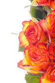 Bouquet of orange roses — Stock Photo