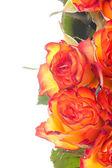 Bukiet róż pomarańczowy — Zdjęcie stockowe