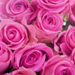 Photo: Closeup of pink roses