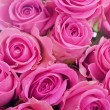 Stock Photo: Closeup of pink roses