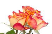 Ramo de rosas naranjas hermosas — Foto de Stock