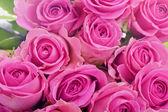 粉红色玫瑰特写 — 图库照片